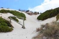 Dune dune