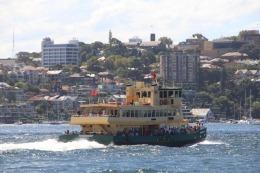 Les Ferry, un véritable réseau de bus sur l'eau