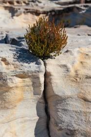Fissure et arbuste