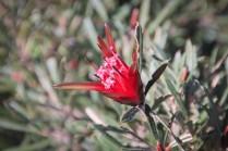 Une fleur, rouge