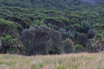 Le bush