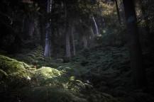 Rayon de soleil dans la forêt