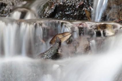 Feuille perdu dans une cascade
