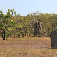 Deux styles de termitières