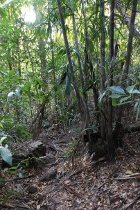 Oui, c'est un peu la jungle