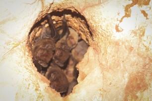 Chauve souris / Bats